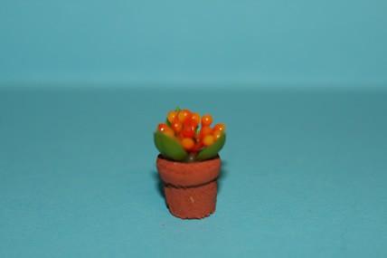 Topfpflanze Mandarine