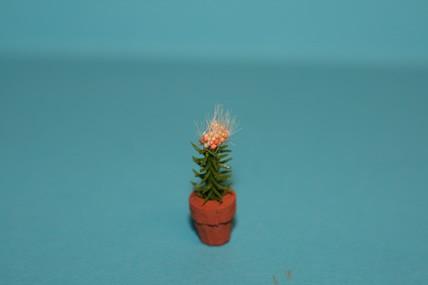Kaktus im Topf, gelb-orange Blüten