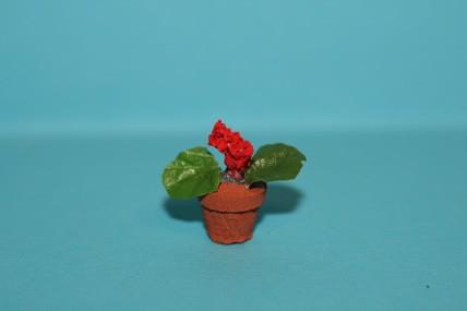 Topfpflanze wilde Geranien