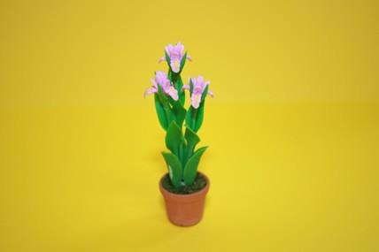 Schwertlilie rosa