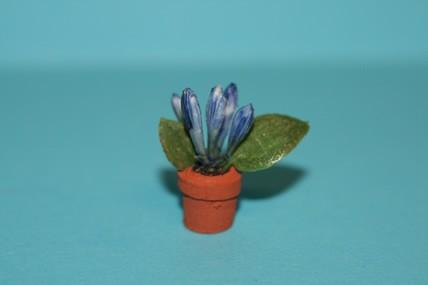 Topfpflanze blau