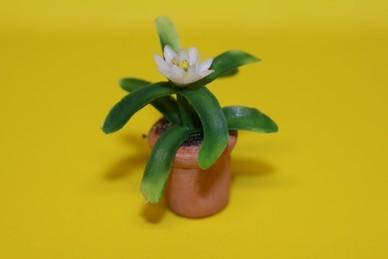 Kleine Topfpflanze, Blüte weiß