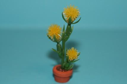 Igelkaktus im Topf, gelbe Blüten