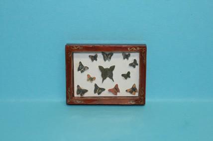 Bild Schmetterlingssammlung