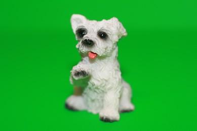 Hund weiß/grau, Pfote hoch