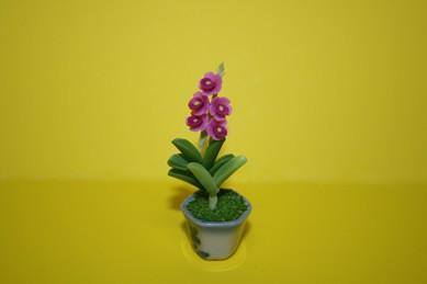 Orchidee dunkelrosa, kleine Blüten, im Topf