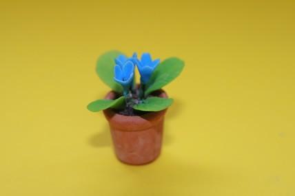 Topfpflanze, blaue Blüten