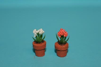 2 Topfpflanzen, orange + weiß