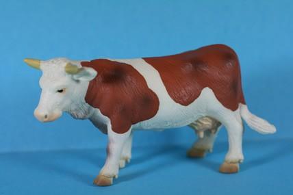 Kuh stehend, braun-weiß