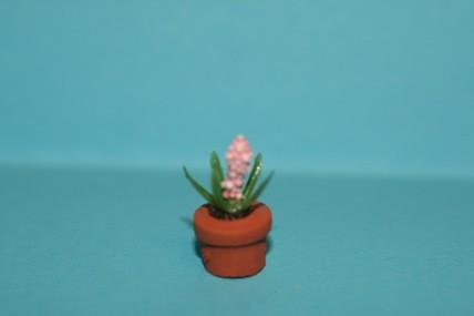 Topfpflanze Hyazinthe