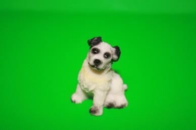 Hund weiß/schwarz