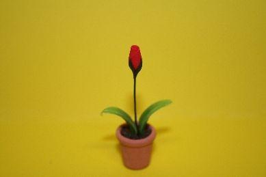 Tulpe rot, in Terracotta-Topf