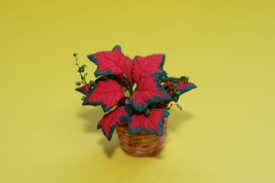 Zimmerpflanze rot, im Flecht-Übertopf