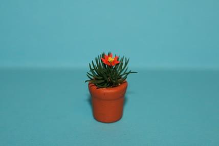 Igelkaktus im Topf, rote Blüte