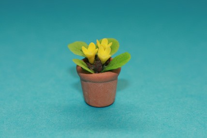 Topfpflanze, gelbe Blüten