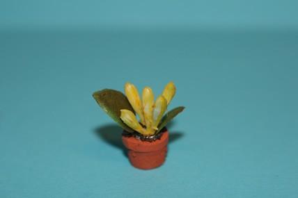 Topfpflanze gelb