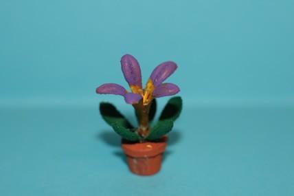 Topfpflanze lila