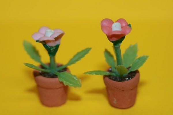 Blumen im Terracotta Topf, jetzt blau + weiß