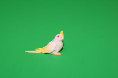 Kakadu klein, Kopf nach oben, weiß/gelb