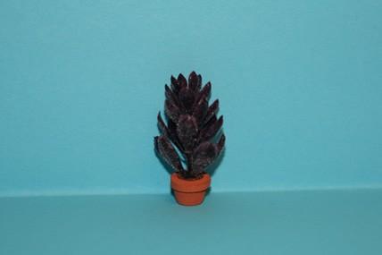 Pflanze dunkelrot, im Topf