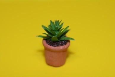 Kleine Grünpflanze im Terracottatopf