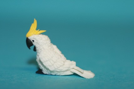 Kakadu klein, weiß