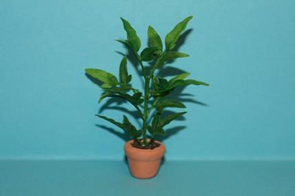 Pflanze grün, im Topf