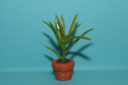 Pflanze grün