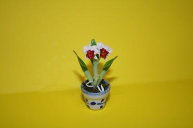 Orchidee weiß/dunkelrot, im Topf
