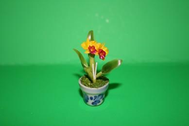 Orchidee orange/gelb, im Topf