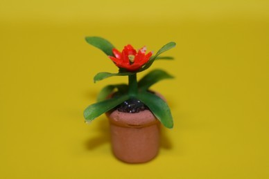 Kleine Topfpflanze, Blüte rot, im Terracottatopf