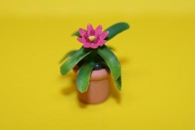 Kleine Topfpflanze, Blüte pink dunkel