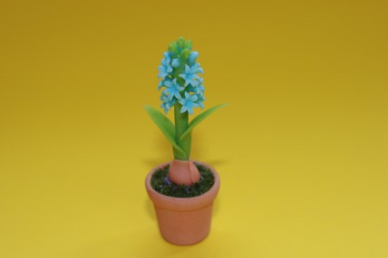 Hyazinthe blau