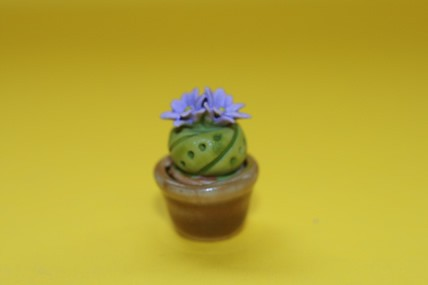 Kaktee im Topf, fliederfarbene Blüte, div. Ausführungen