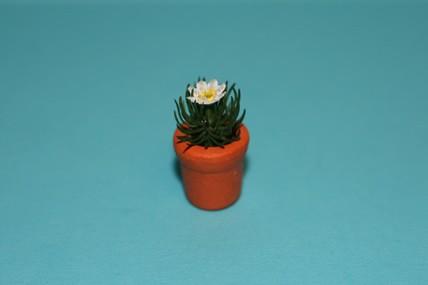 Igelkaktus im Topf, weiße Blüte